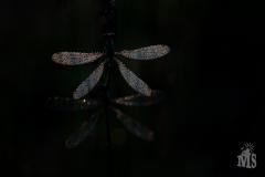 maurice-smeets-sluiter-AI7A4754_01